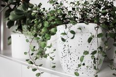 DIY: Blumentopf im Sprenkel-Look *** DIY: splattered effect