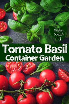 Vegetables Gardening Keep the flavors of summer close at hand with a tomato container garden filled with fresh basil and flowers. Start out strong with good soil, proper support and a plan for the summer Tips For Growing Tomatoes, Growing Tomato Plants, Growing Tomatoes In Containers, Growing Herbs, Growing Vegetables, How To Grow Tomatoes, Garden Compost, Garden Soil, Herbs Garden