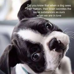Did You Know? - http://bostonterrierworld.com/did-you-know/