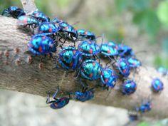 weird bugs | weird insects australia dec2010 jpg downloads
