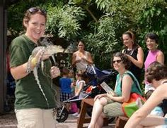 Staying at our Siesta Key Sarasota hotel and need an activity for the kids? Take a trip over to Sarasota Jungle Gardens where you can experience animals plants shows playgrounds and more. Sarasota Hotels, Sarasota Florida, Reptiles, Mammals, Sarasota Jungle Gardens, Tropical Beach Resorts, Siesta Key, Great Places, Places To Visit