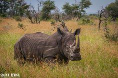 #Rinoceronte. South Africa foto di Girolamo Monteleone