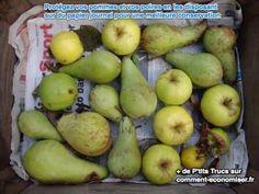 des pommes et des poires sont entreposées sur du papier journal