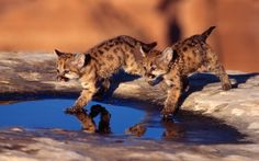Backgrounds For > Baby Wild Animal Wallpapers