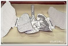 The Respiratory System cut out activity- includes heart and lungs