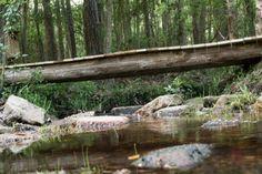 Graham Creek 3