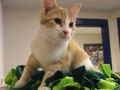 Blankets for Kitties