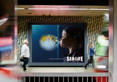 Sea Life Aquarium: Pufferfish