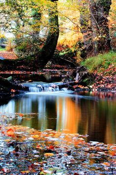 Autumn Stream Photograph by Les Schofield - Autumn Stream Fine Art Prints and Posters for Sale