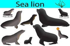 Sea lion #vector #animal #mammal #lion #seal #pinniped #wild #collection #zoo #sea