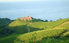 Beautiful Vineyard of TXAKOLI on the Spanish Atlantic Coast Fresh Sparkling #wine img http://www.oriodonejakue.net/ #Spain