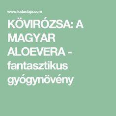 KÖVIRÓZSA: A MAGYAR ALOEVERA - fantasztikus gyógynövény Health And Beauty, Medicine, Health Fitness, Relax, Medical, Fitness, Health And Fitness