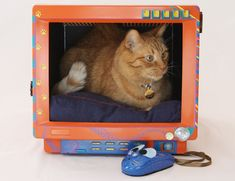 Your cat sits on your computer anyway, so just give it to them. | 9 Things To Do With That Ancient Monitor In Your Attic
