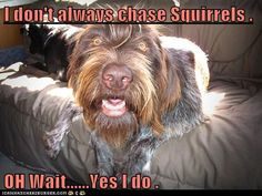 I don't always chase Squirrels .  OH Wait......Yes I do .