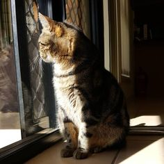 Skelly seeking out some warmth. - - - #sunshine #winteriscoming #kitty #suzspetservices