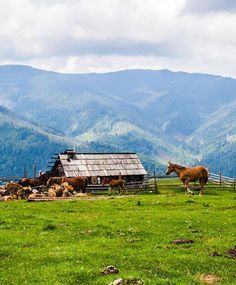 Carpathian mountings, Ukraine, from Iryna with love