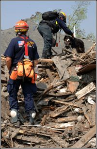 FEMA Urban Search and Rescue Task Force members utilize their rescue dogs to search for residents impacted by Hurricane Katrina. Hurricane Katrina, Search And Rescue, Working Dogs, Rescue Dogs, Urban