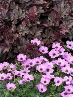 My Favorite Plant Combinations 74