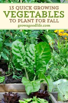 Extend your vegetable garden into fall and be rewarded with fresh harvests a little longer. You will be surprised what you can grow in your fall garden and harvest in 60-days. Visit to learn which cool-season crops to grow in your fall vegetable garden.