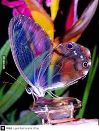 Image result for most beautiful butterflies in the world