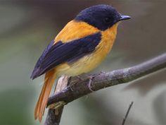 Pampadum Shola National Park - in Kerala, India