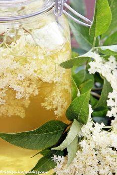 Holunderblütensirup Holunder findet Ihr überall, auf Wiesen, im Wald, die großen weißen Blüten sind nicht zu übersehen. Einfach die Blütendolden abschneiden und mit nach Hause nehmen. Kleiner Tipp: Gut aufpassen, dass an den Blüten keine kleinen schwarzen Läuse dran sind! Die lieben den Holunder nämlich auch und hängen häufig an den Stängeln unter den Blüten. Hier das Sirup-Rezept: 2 Liter Wasser 50 g Zitronensäure 1 kg Zucker 1/2 Zitrone (in Scheiben geschnitten) ca. 25 große Holund...