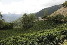 cool Colombian Santa Barbara Coffee Beans Fresh Roasted WB - Ground 2  1 Pound Bags - For Sale