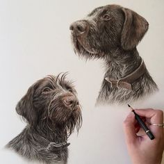 "Two very wet dogs complete! Had such fun drawing Tatti and Wilf who were my first German Wirehaired Pointers. (16x20"") I hope you like them! #germanwirehairedpointer #petportrait #colouredpencil"