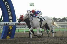 【きょうのユキンコ彡^・∋】 門別2RC4-6組(ダ・外1,000m)に出走、2着となりました。 真っ白な馬体がお日さまにひときわ映えますね☆彡