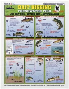 bass fish equipment - google search | did you know? | pinterest, Fishing Bait