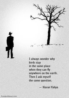 """""""I always wonder why birds stay in the same place when they can fly anywhere on the earth. The I ask myself the same question."""""""