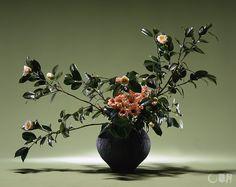 椿の枝ぶりをいかして疎密を大切にいけました。口元にさした菊の色が温かさを添えます。花材:椿、菊 花器:陶器花器 Camellia branches of varied densities are carefully arranged in this work. The color of chrysanthemum at the mouth of the container adds the warmth. Material:Camellia, Chrysanthemum Container:Ceramic vase  #ikebana #sogetsu