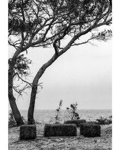 #northcarolina #albemarlesound #hay_bales #water #coast #tree