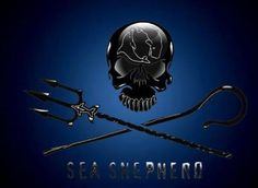 ALBUM: Sea Shepherd Supporters. https://www.facebook.com/sharky.white.3/media_set?set=a.190172207786161.49706.100003801480148=1