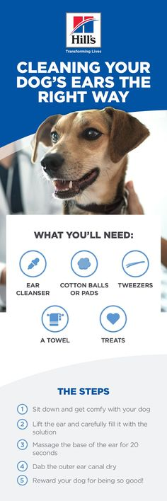 Ear cleaning is an aspect of dog grooming that shouldn't be neglected. Without regular cleaning, wax and oils build up inside the ear, increasing the risk of ear infection and hearing damage. With this in mind, it's a good idea for any pet owner to know how to clean dog ears. Check out this article for a complete how-to. Cleaning Dogs Ears, Dog Cleaning, Puppy Care, Pet Care, Dogs Ears Infection, Dog Grooming, Grooming Shop, Endocannabinoid System, Dog Information