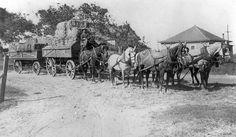 Six horse team hauling hay at Talbert (now Fountain Valley), California, ca 1912 California History, Texas History, Vintage Horse, Vintage Farm, Fountain Valley, Alexander The Great, Vintage Fishing, White Horses, History Photos