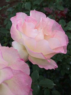 Flowers Gardens: ~Romantic GARDEN~