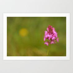 Wild Orchid 2330 Art Print by metamorphosa - $22.88
