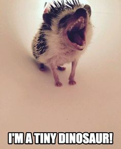 Hear my hedgehog -- I mean, DINOSAUR ROAR!