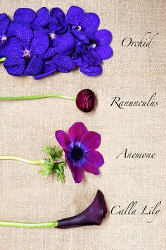 Google Image Result for http://www.quinncooperstyle.com/wp-content/uploads/2013/04/flower-bouquet-2.jpg