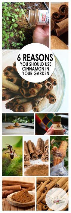 Gardening, How to Use Cinnamon In The Garden, Garden Tips and Tricks, Gardening Pest Control, Natura Tips And Tricks, Organic Gardening Tips, Gardening Hacks, Vegetable Gardening, Sustainable Gardening, Gardening Tools, Cinnamon Garden, Organic Insecticide, Garden Pests
