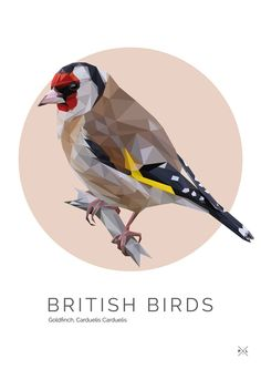 This little fellow is a Goldfinch and he looks very grand! He's another one of our British Birds range.