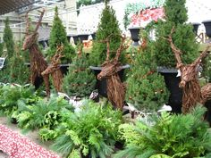 grapevine reindeer, live christmas trees and winter urn inserts oh my! ...Georgina garden centre