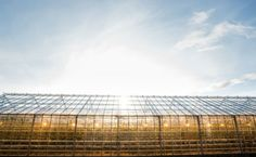 Are Solar-Powered Greenhouses The Way Forward? | Care2 Causes