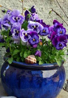 Pansies- quite possibly my favorite flowers! Container Flowers, Container Plants, Container Gardening, Arrangements Ikebana, Flower Arrangements, Blue Flowers, Beautiful Flowers, Deco Nature, Winter Plants