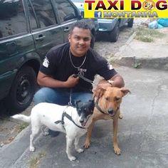 """TAXI DOG MONTANHA TRANSPORTE DE ANIMAIS NO RIO DE JANEIRO: JÚLIA & PRINCESA29/12/2015 -- Olha eu aí com """"Júli..."""