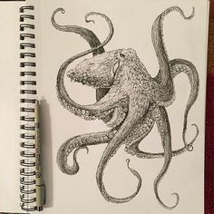 Magnificent #penandink #sketchbook #drawing by @ak.sockeye.arts of a #Pacific Giant #octopus! Great looking textures on the #skin of this eye-armed #mollusk... and the details on the #tentacles and #suctioncups are pretty awesome too. Really cool #illustration Jessica!  #AnimalAirship