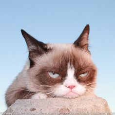 #GrumpyCatphoto For more Grumpy Cat stuff, gifts, quotes and meme visit www.pinterest.com/erikakaisersot