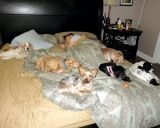 Sleeping with the pack