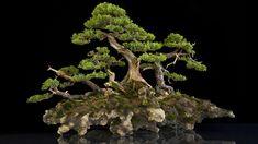 World's Most Amazing Bonsai trees - YouTube